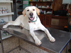 Table inox vétérinaire