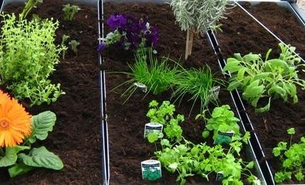 cultiver ses légumes FERIGAMI