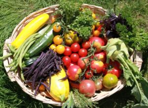 jardinières potager